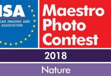 Eisa Maestro Photo Contest 2018