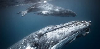 WWF-Frans Lanting Photo Award