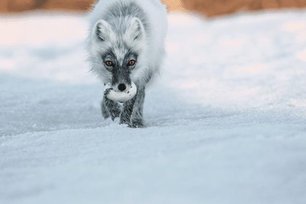Arctic Treasure. © Sergej Gorsjkov